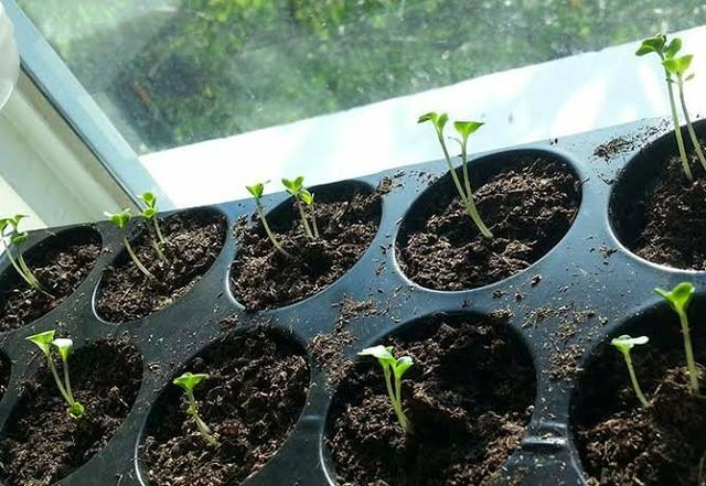 Vende se húmus adubo para plantar - Foto 3