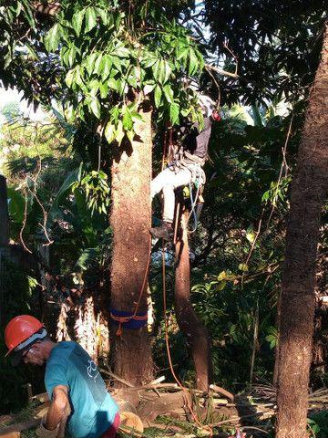 Poda e corte de árvores de alto risco  - Foto 3