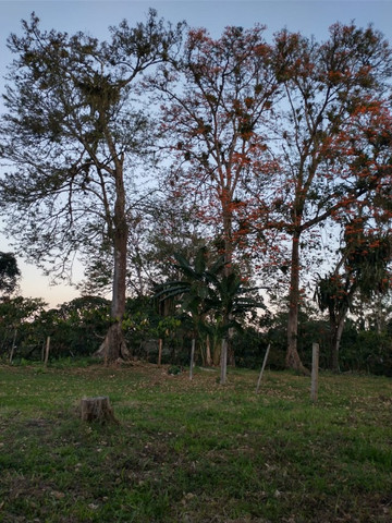 Fazenda  área 100 ha  lavoura maior parte de cacau,  Casa 4/4  escriturada - Foto 12