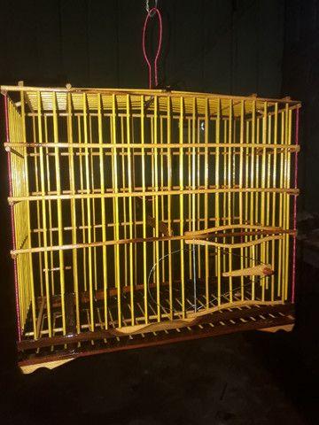 gaiolas preseiras - Foto 4
