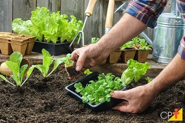 Vende se húmus adubo para plantar - Foto 6