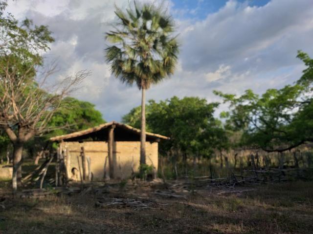 Vende-se uma fazenda - Foto 8