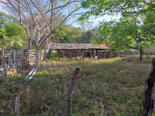 Vende-se uma fazenda - Foto 3