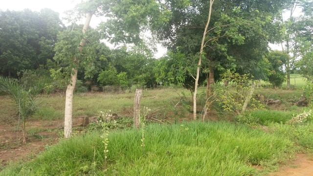 Chacara 2 hectares lazer - Foto 5