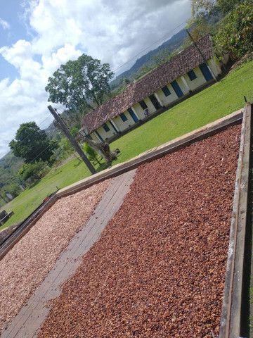 Fazenda  área 100 ha  lavoura maior parte de cacau,  Casa 4/4  escriturada - Foto 3