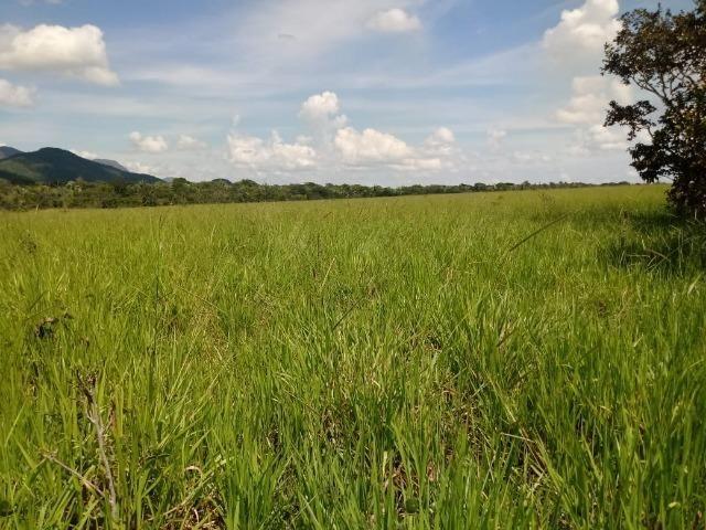 Fazenda Rosario Oeste 50 km fora asfalto 782 ha R$ 3 mi