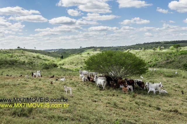Fazenda pecuária de 6.400 Hectares. Capacidade pra 8.000 bois. - Foto 9