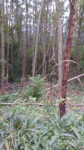 Vendo chacara 10 hectares - Foto 7