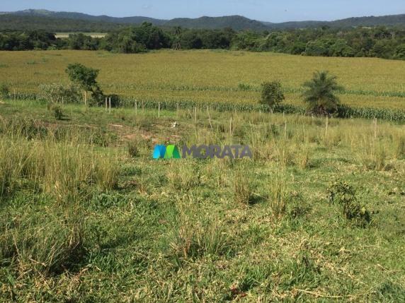 FAZENDA A VENDA - 86 hectares - REGIÃO SETE LAGOAS (MG) - Foto 2