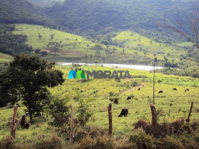 FAZENDA - 334 hectares - PARÁ DE MINAS (MG) - Foto 7