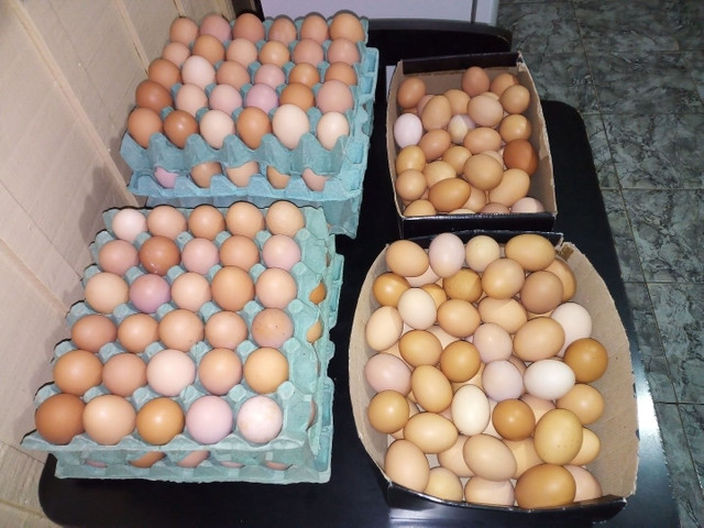 Ovos caipira frescos