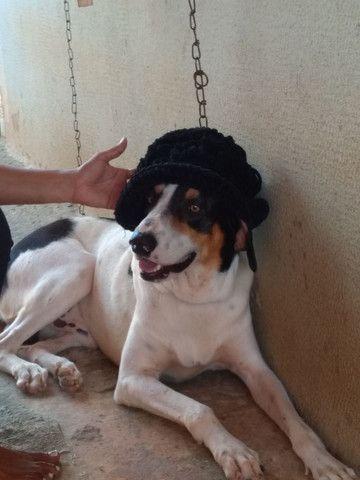 Cachorro americano puro - Foto 3