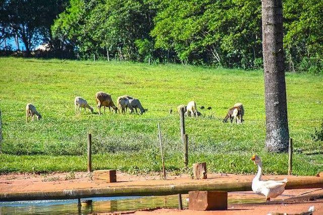 Compre sua fazenda de maneira PARCELADA - Foto 2