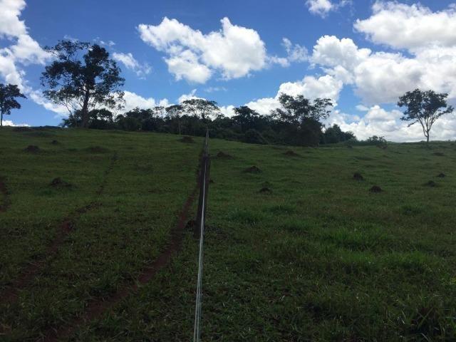 Fazenda com 5,5 Alqueires, Toda Formada, Pontalina Goiás, - Foto 10
