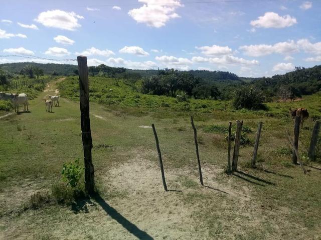 Vendo excelente fazenda / maranhão - Foto 5