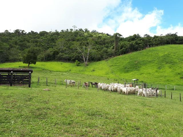 Venda ou arrendamento Excelente Fazenda 540 tarefas em Ubaira - Foto 9