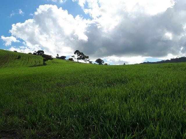 Venda ou arrendamento Excelente Fazenda 540 tarefas em Ubaira - Foto 2