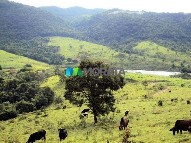 FAZENDA - 334 hectares - PARÁ DE MINAS (MG) - Foto 8