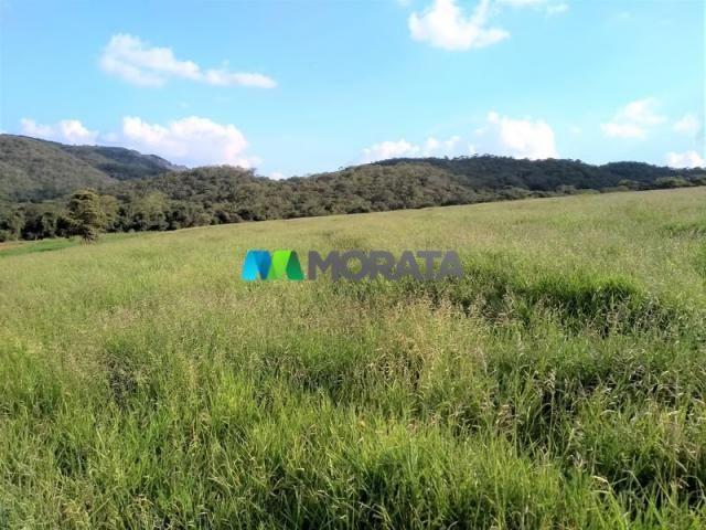 FAZENDA - 213 hectares - ONÇA DO PITANGUI (MG) - Foto 5