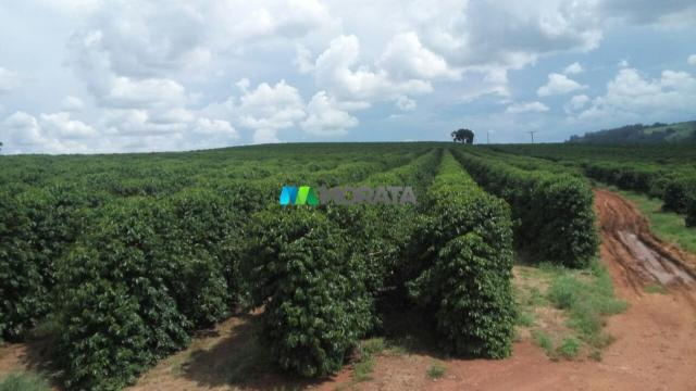 FAZENDA CAFÉ - 176,66 hectares - REGIÃO MACHADO (MG) - Foto 2