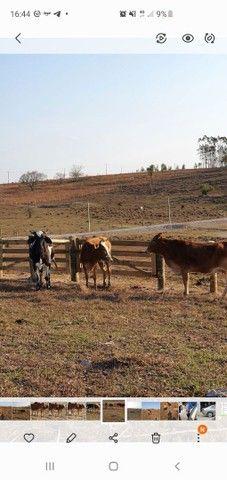 Vaca  - Foto 3