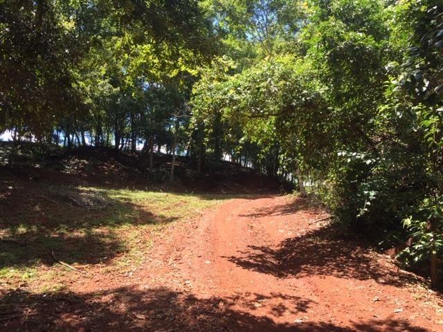 Fazenda com 5,5 Alqueires, Toda Formada, Pontalina Goiás, - Foto 3