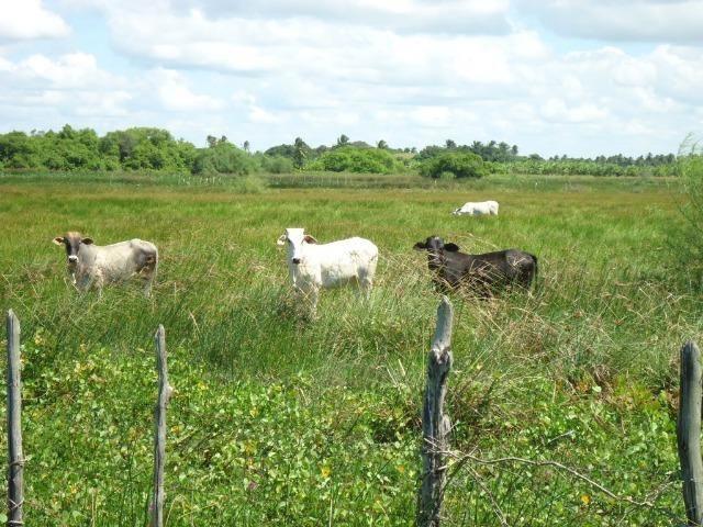 Vendo Fazenda em Ceará Mirim - Foto 20