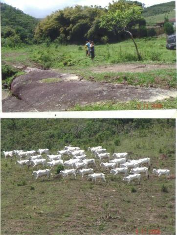 Fazenda 97 Alqs Na Região do Vale do Paraíba SP Negocio de oportunidade - Leia o anúncio - Foto 3