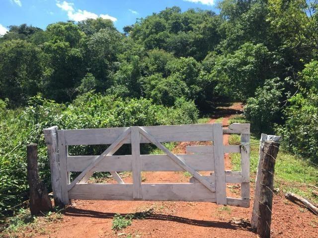 Fazenda com 5,5 Alqueires, Toda Formada, Pontalina Goiás, - Foto 2