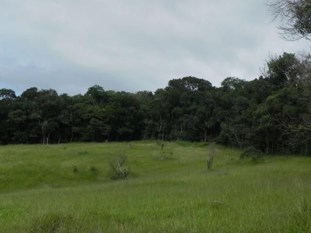 Agt-ótimo terreno para construir chacará na região de Mairiporã - Foto 10