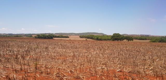 Fazenda em Rio Verde 28 alqueires   170 mil   Valor de Oportunidades - Foto 2