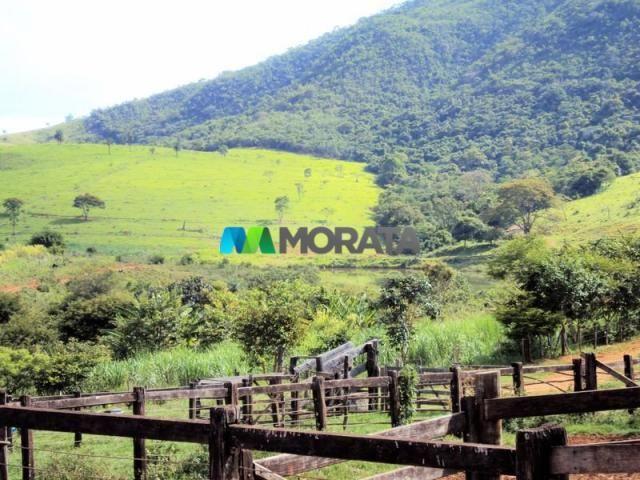 FAZENDA - 334 hectares - PARÁ DE MINAS (MG) - Foto 19