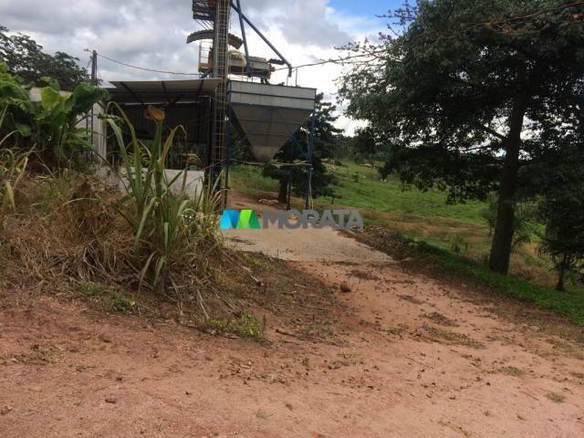 FAZENDA CAFÉ - 176,66 hectares - REGIÃO MACHADO (MG) - Foto 17