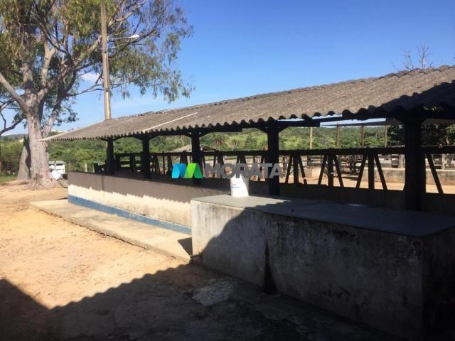 FAZENDA A VENDA - 86 hectares - REGIÃO SETE LAGOAS (MG) - Foto 13