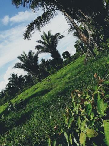 Preciso Fazenda Bruta P/ Agricultura 2.000 Alqueires Pará
