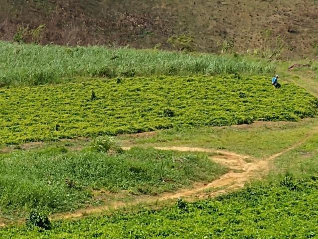 Fazenda com 180 Hectares a 8 km da Pista de Cortês-PE - Foto 10