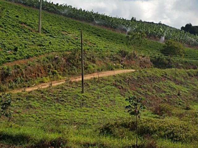 Fazenda com 180 Hectares a 8 km da Pista de Cortês-PE - Foto 8