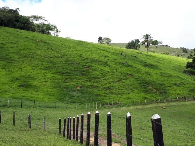 Venda ou arrendamento Excelente Fazenda 540 tarefas em Ubaira - Foto 7
