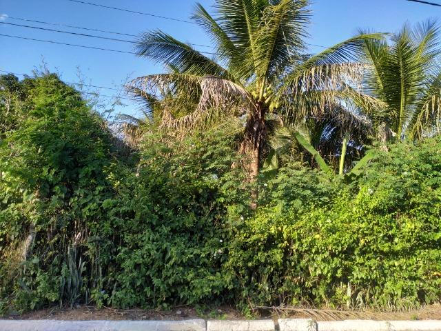 Sítio na Vila Temão - Jitaúna - Foto 18