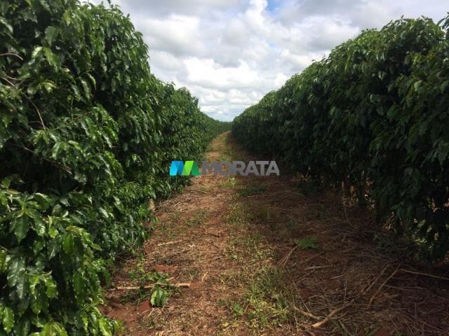 FAZENDA CAFÉ - 176,66 hectares - REGIÃO MACHADO (MG) - Foto 6