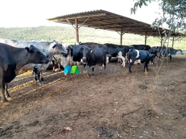 FAZENDA - 213 hectares - ONÇA DO PITANGUI (MG) - Foto 6