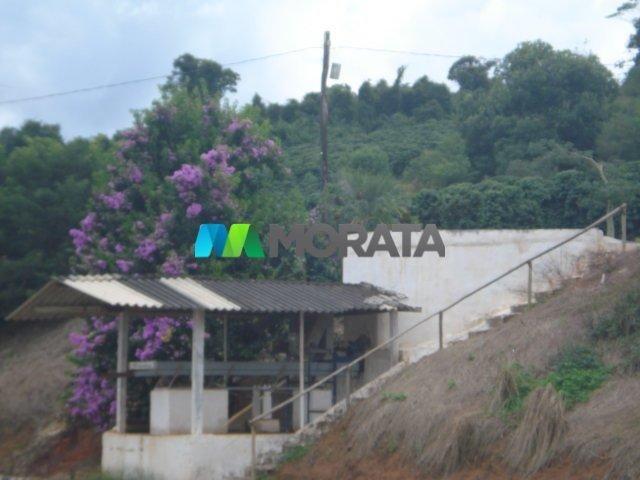 FAZENDA CAFÉ - 176,66 hectares - REGIÃO MACHADO (MG) - Foto 19
