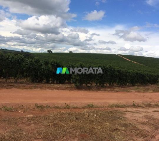 FAZENDA CAFÉ - 176,66 hectares - REGIÃO MACHADO (MG) - Foto 5