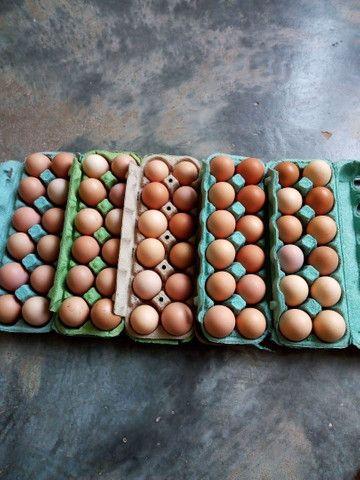 Ovos caipira frescos - Foto 4
