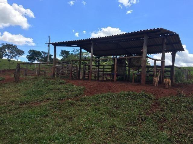 Fazenda com 5,5 Alqueires, Toda Formada, Pontalina Goiás, - Foto 6