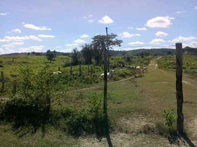 Vendo excelente fazenda / maranhão - Foto 4
