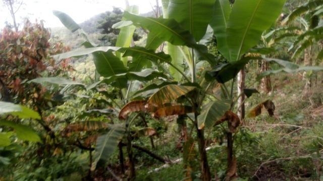 Vende-se Fazenda no Boqueirão de Itajuru - BA - Foto 8