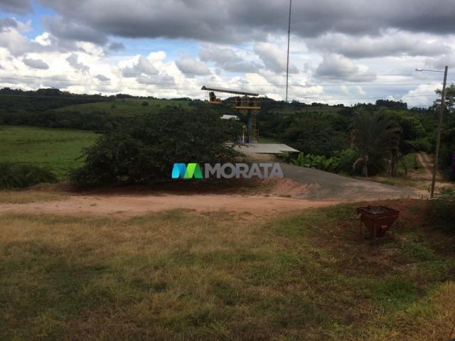 FAZENDA CAFÉ - 176,66 hectares - REGIÃO MACHADO (MG) - Foto 16