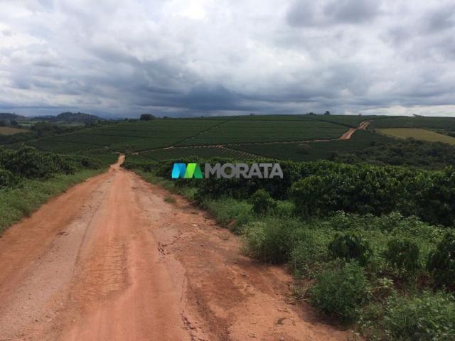 FAZENDA CAFÉ - 176,66 hectares - REGIÃO MACHADO (MG) - Foto 4