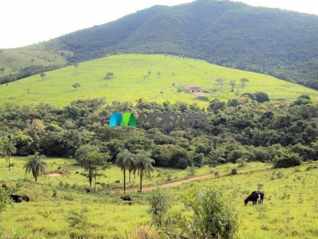 FAZENDA - 334 hectares - PARÁ DE MINAS (MG) - Foto 11